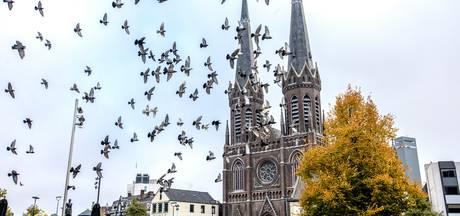 Gemeente is 'dwarse duivenvoerders' beu, Febo ook: voeren voortaan strafbaar