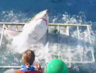 """Man die in kooi door haai werd aangevallen: """"Het ging te snel om bang te zijn"""""""