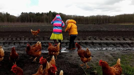 Samen lekker stampen in de plassen is wat Tomas en Zoë graag doen. Om hen heen scharrelen de kippen.