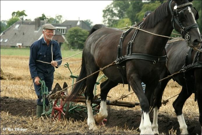 Het land bewerken met paarden