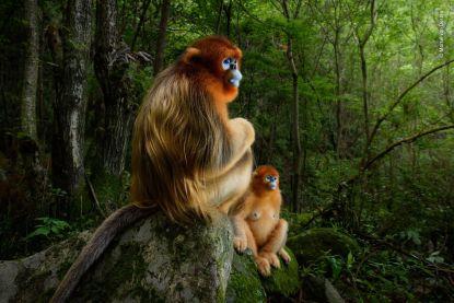 IN BEELD. Nederlander en Belg winnen prijs voor beste natuurfoto