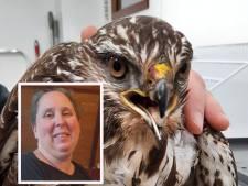 Yvon ontfermt zich over buizerd die kip uit haar tuin pakte: 'Ik denk dat ze over een paar weken weer rondvliegt'