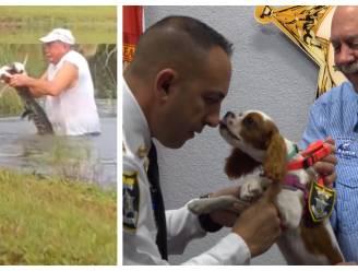 Puppy die door baasje werd gered uit bek van alligator, benoemd tot 'hulphond' van de politie