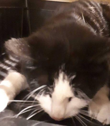 'Motormuis' van de politie vindt aangereden katje in Emmeloord