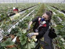 Pleidooi voor goede huisvesting in Zaltbommel: 'Arbeidsmigrant krijgt het voor het zeggen'