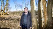 """Burgemeester boos na bomenkap langs tramlijn, maar Natuur en Bos verweert zich: """"Al eeuwen geleden aangekondigd"""""""