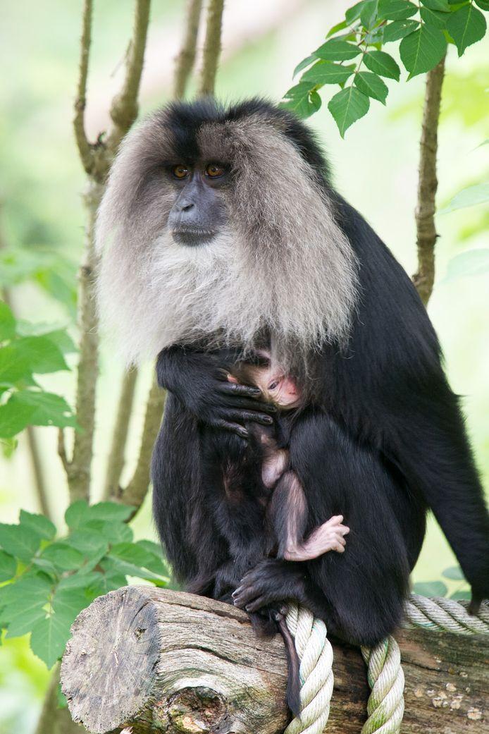 Moeder en baby maken het goed.