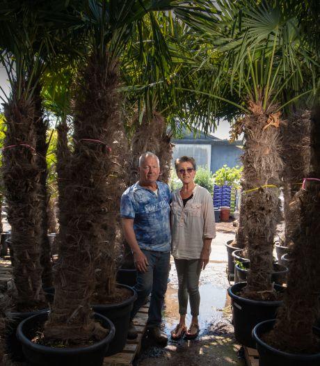 Bomenhandel uit Ens stopt met exclusieve bomen: 'Hebben veel Quote 500-jongens als klant'