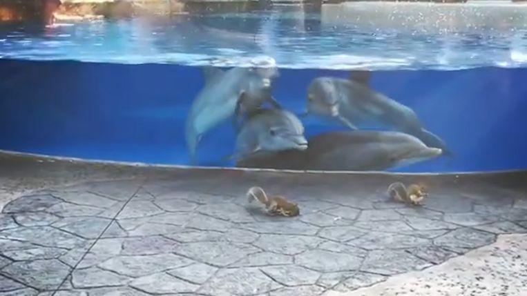 De dolfijnen waren helemaal in de ban van de eekhoorns.