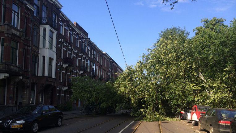 Bij het Oosterpark is een boom op de bovenleidingen gewaaid. Beeld Josien Wolthuizen