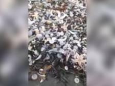 Animaux marins tués au Kamtchatka: l'hypothèse d'une pollution industrielle écartée