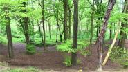 Groen vraagt meer bossen in het Pajottenland