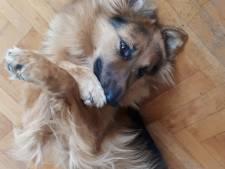 Waarom heft Etten-Leur nog wèl hondenbelasting en hoe eerlijk is dat?