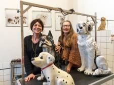 Amersfoortse trimsalonhouders blij: hond mag tóch worden geknipt als dierenwelzijn in gevaar komt