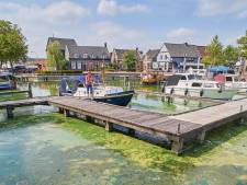Dobberen in groene soep in Veghelse haven