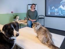 Afwijkend kattengedrag? Leer je mysterieuze huisgenoot kennen met een speciale therapie