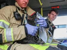 Buren redden moeder en kinderen uit brandende woning Emmeloord, katten krijgen zuurstof
