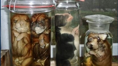 Luguber aanbod op tweedehandssite: op sterk water gezette puppy's