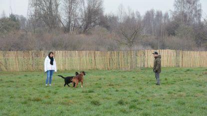 Schilde belooft nieuwe hondenweide tegen de lente