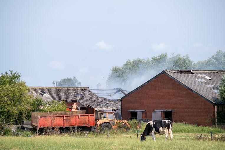 De brand in het veeteeltbedrijf in de Molenstraat brak vanochtend om 4.15 uur uit.