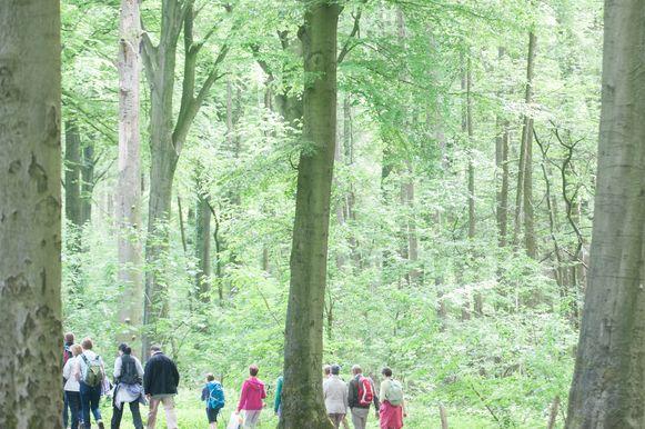 Het Complex Project Kluisbos zoekt een oplossing voor de zonevreemde verkavelingen, parkings en recreatiezones. Er moet een afweging gemaakt worden tussen de natuur en andere functies in het bos.