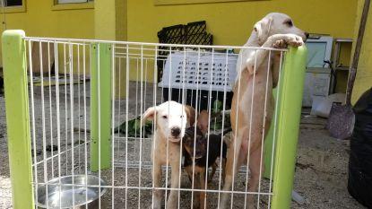 Meer dan 270 honden en katten van dierenopvang op Bahama's gestorven door orkaan Dorian