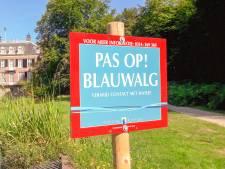 Waterschap waarschuwt voor blauwalg in vijver bij Huis Zypendaal