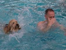 Ruim 300 honden plonzen met hun baasje in het Varsseveldse Van Pallandtbad
