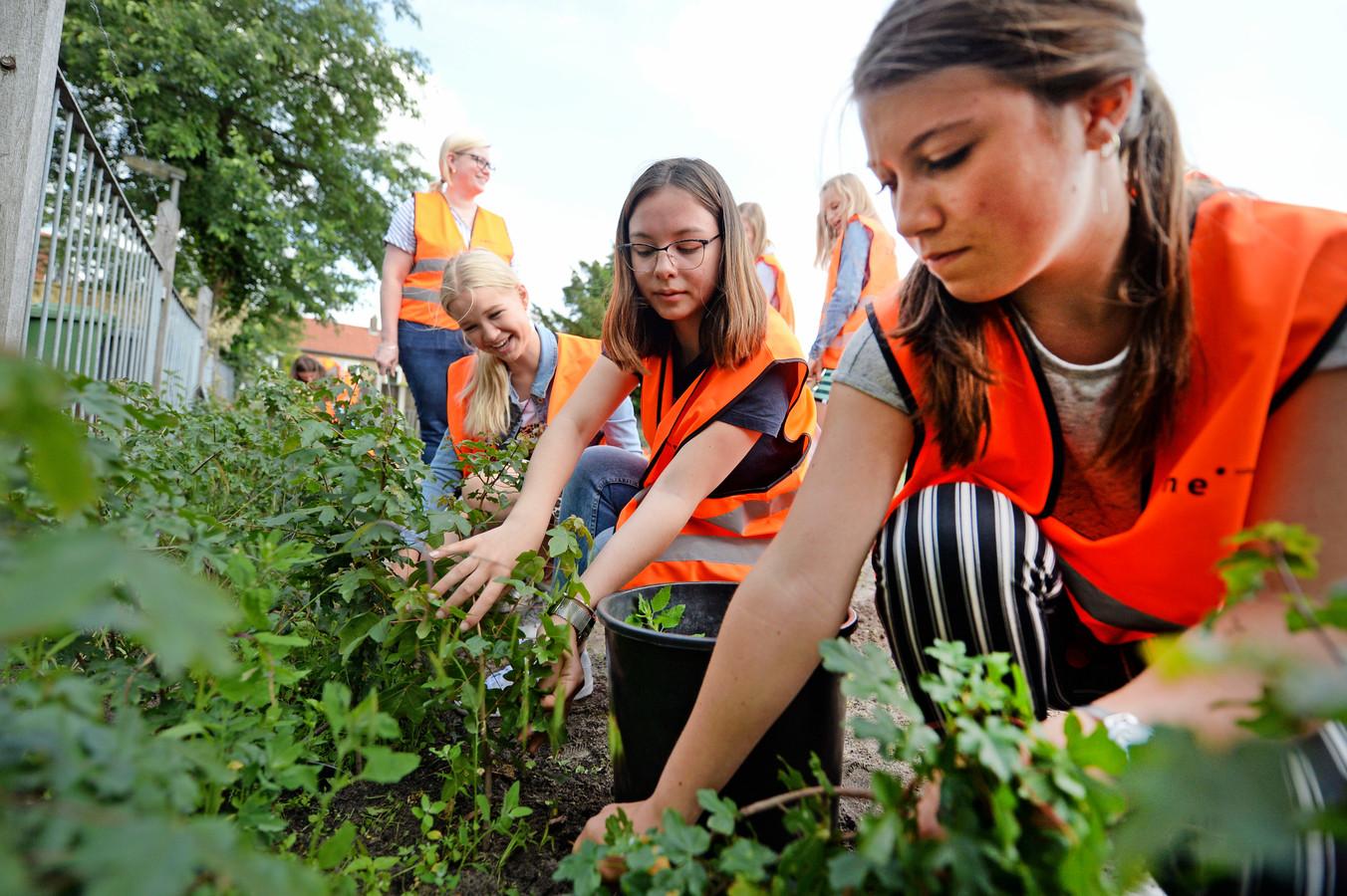 Leerlingen van het Zone.college doen ervaring op aan het Orionplantsoen.