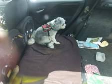 Politie Nunspeet redt hond uit snikhete auto