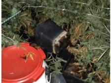 Drie verdachten aangehouden bij ontruiming hennepkwekerij in Sint-Michielsgestel