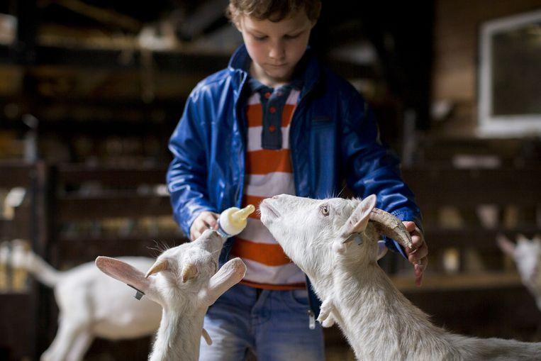 De geitenboerderij in het Amsterdamse Bos Beeld Rink Hof