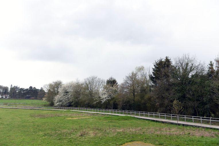 Illustratiebeeld Meerdaalwoud in Oud-Heverlee