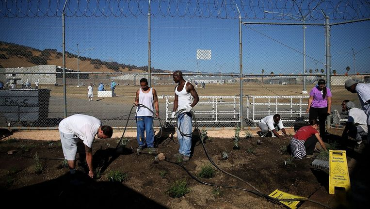 Gedetineerden werken in de tuin van de Solano-gevangenis in Californië. Beeld Justin Sullivan / AFP