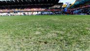 FT België. Club krijgt nieuwe grasmat - Extra doktersadvies voor Dimata