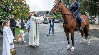 Paard en vijftig andere dieren krijgen de zegen van pastoor