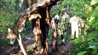 Jongeren stichten brand in vermolmde boom op de Lange Munte