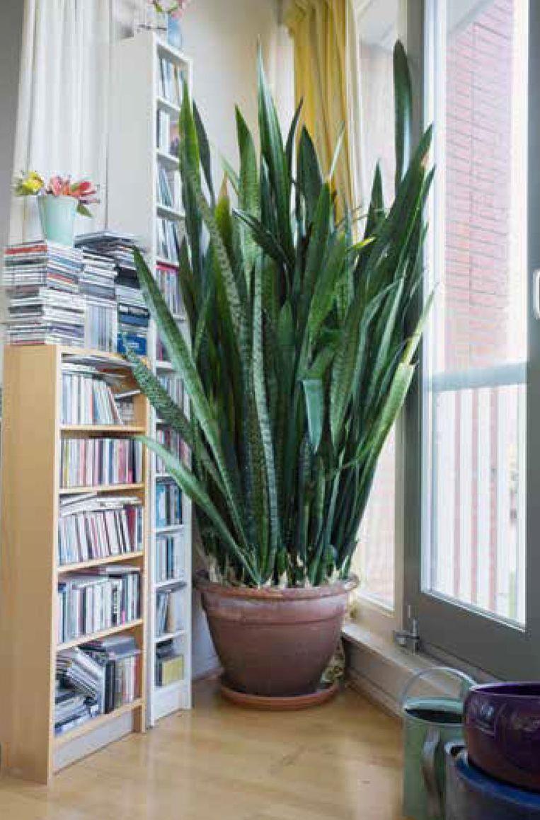 Zelfs deze plant moest verdwijnen uit een werkkamer. Beeld The Plant Collection
