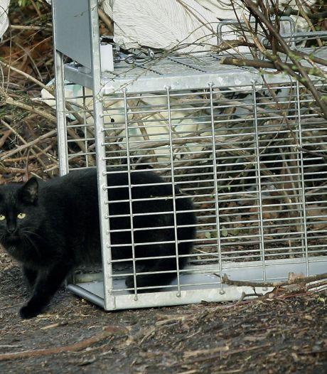 Extra ambulance voor de opvang van wilde katten; jaarlijks 240 Achterhoekse katten opgevangen
