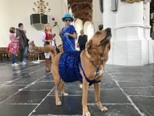 Parade van honden met hun baasjes door Culemborgse kerk