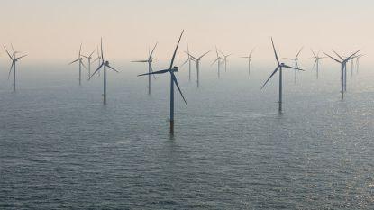 Primeur voor de Noordzee: windmolenpark krijgt als eerste ter wereld een zeewierboerderij