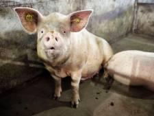 BMF komt met Brabants Actieplan Stikstof: 'Bij natuur alleen kleine boeren'