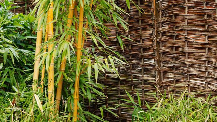 Bamboe: het bouwmateriaal van de toekomst binnenland ad.nl