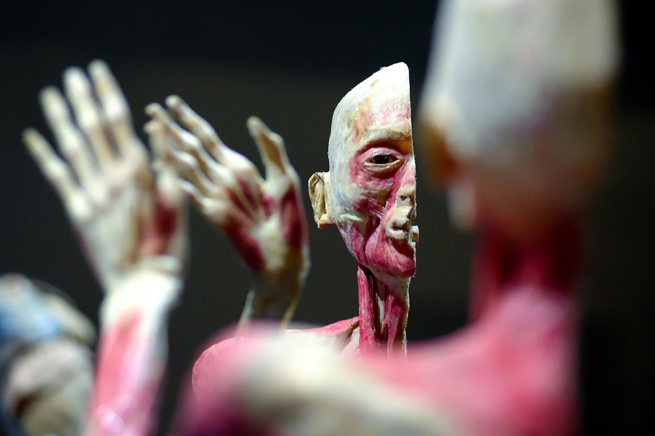 Een eerdere expositie van 'Real Human Bodies'.