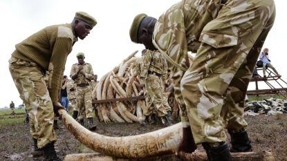 Tanzania arresteert man in bezit van 338 stukken van slagtanden van olifanten