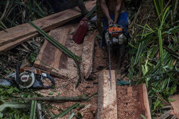 De ontbossing is onder andere te wijten aan illegale houtkap.