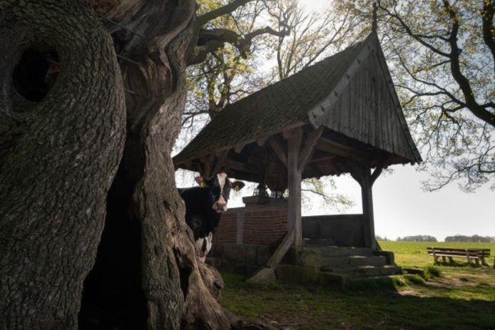 Liesje bij de Kroezeboom in Fleringen.