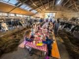 Bijzonder: leerlingen uit Enschede ontbijten tussen de koeien: 'Stinkt wel beetje'