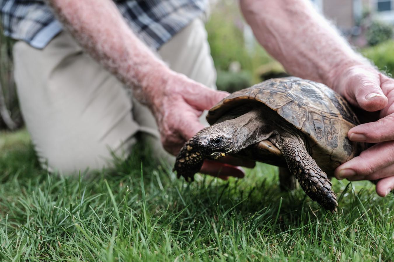 Schildpad. Foto ter illustratie