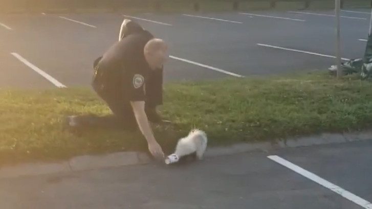 Agent krijgt stank voor dank na redden stinkdier